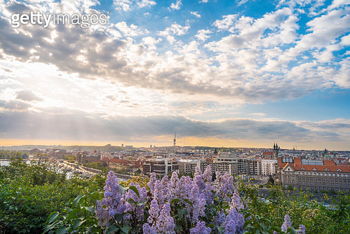 Sunrise Over Prague City And Lilac Flowers - gettyimageskorea