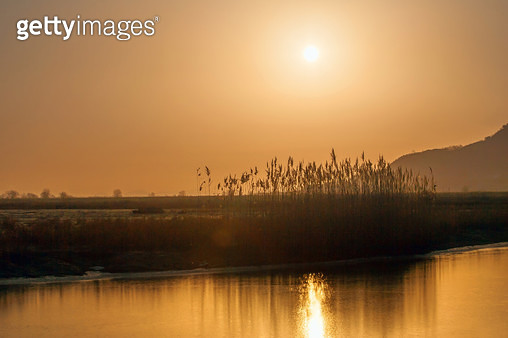 갈대와 아침의 태양,화성시 송산면 - gettyimageskorea