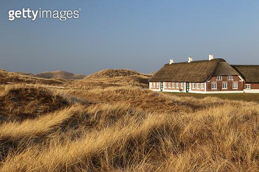 Farmyard in the dunes - gettyimageskorea