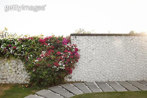 Beautiful garden wall at sunset - gettyimageskorea