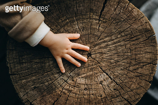 Tiny hand of a toddler touching the texture of old tree trunk in the nature - gettyimageskorea