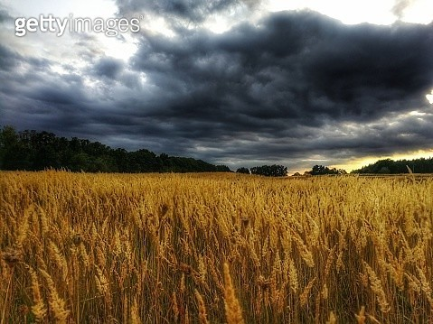 Scenic View Of Agricultural Field Against Sky - gettyimageskorea