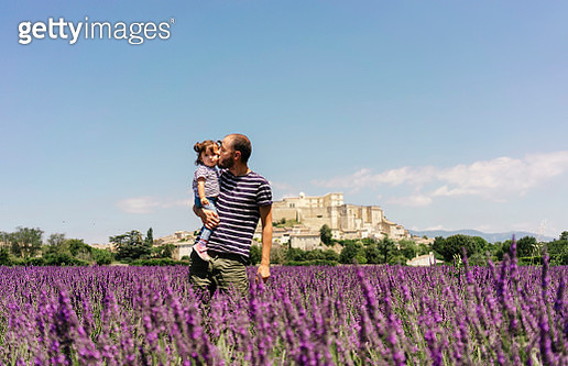 France, Grignan, father kissing his little daughter in lavender field - gettyimageskorea