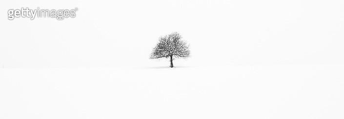 my tree.... - gettyimageskorea