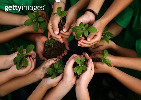 Close-Up Of People Holding Seedlings - gettyimageskorea