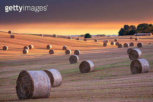 Hay Bales and Field Stubble in a Golden Sunset - gettyimageskorea