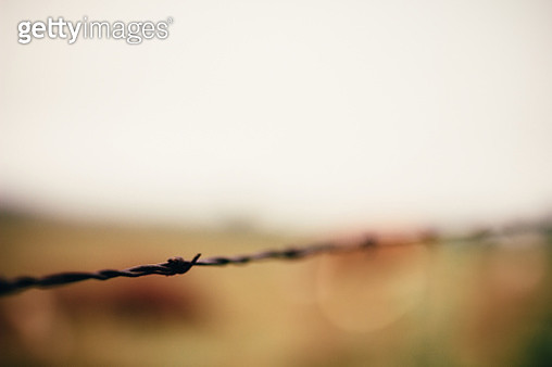 Barbed wire isolated - gettyimageskorea