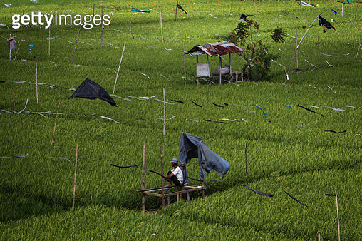 Colorful Plastic Bands on A Rice Field - gettyimageskorea