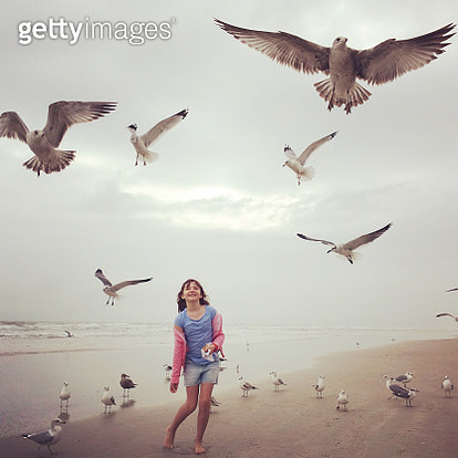 Feeding the Seagulls - gettyimageskorea