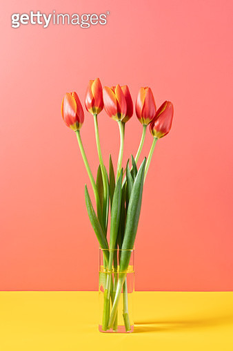 Red Tulips in Glass Vase - gettyimageskorea
