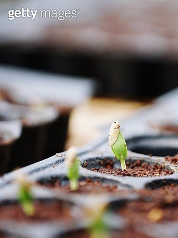 Close-Up Of Plant In Seedling Tray - gettyimageskorea