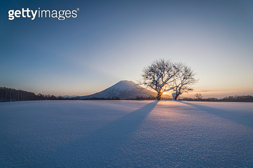 The morning scenery of the famous twin cherry trees and Mt Yotei in winter, Hokkaido, Japan. - gettyimageskorea
