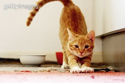Stretching cat - gettyimageskorea
