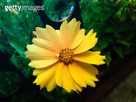 Close-Up Of Yellow Flower - gettyimageskorea