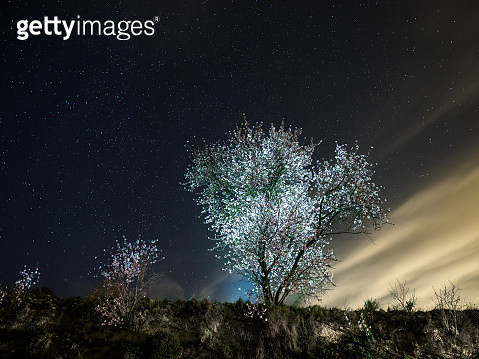 Flowery almond-tree one spring night with a changeable sky of stars and clouds - gettyimageskorea