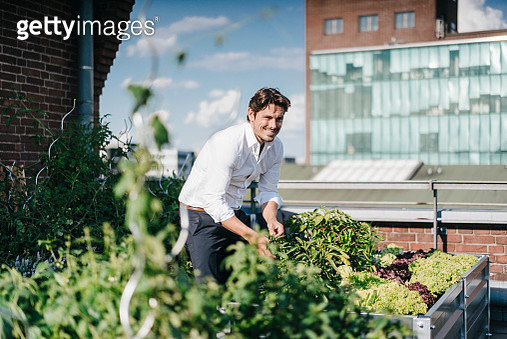 Businessman cultivating plants in his urban rooftop garden - gettyimageskorea