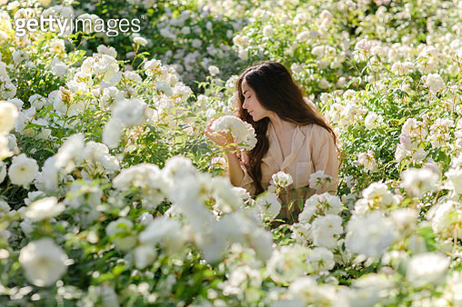 Stunning brunette girl with long hair surrounded by rose flowers. Inspiration of spring and summer. Perfume, cosmetics concept. - gettyimageskorea