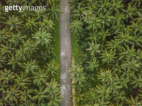 Aerial view of man driving motorbike in palm trees road in the Philippines - gettyimageskorea