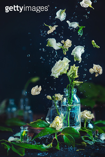 White flowers in a glass vase with water drops and flying petals - gettyimageskorea