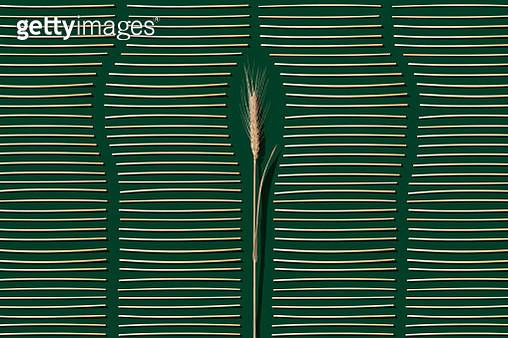 Organic Natural Drinking Straws Made of Wheat Straws - gettyimageskorea