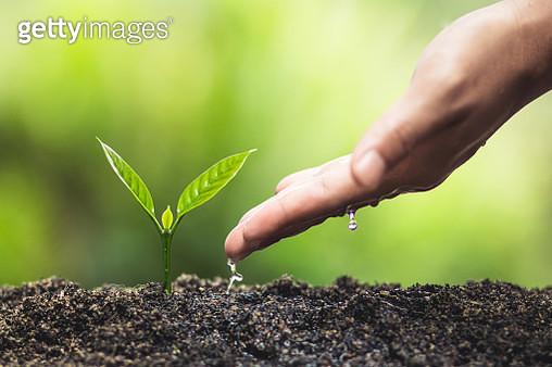 Cropped Hand Watering Seedling - gettyimageskorea