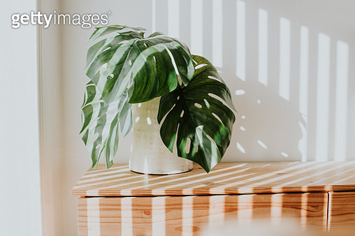 Stylish rustic white planter with swiss cheese plant, against white wall with light streams illuminating the room. Minimalist. Concept and space for copy. - gettyimageskorea