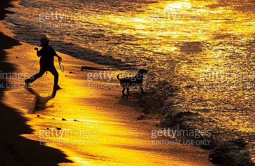 A lady playing with a dog on the morning beach in Japan - gettyimageskorea