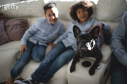 Two black brothers and their dog are sitting on a white sofa on a sunny day. - gettyimageskorea