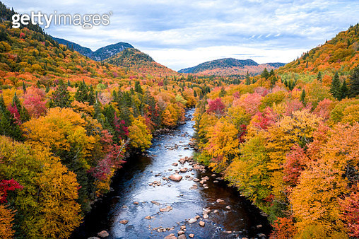 Aerial View of Boreal Forest Nature in Autumn Season, Quebec, Canada - gettyimageskorea
