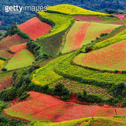 Aerial view of colorful fields, Shichuan, China - gettyimageskorea