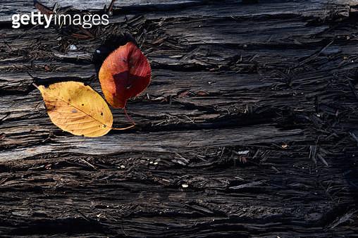 충남 당진, 가을 낙엽 - gettyimageskorea