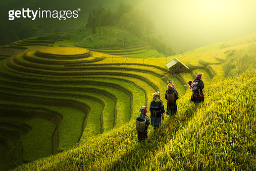 Farmers walking on rice fields terraced - gettyimageskorea