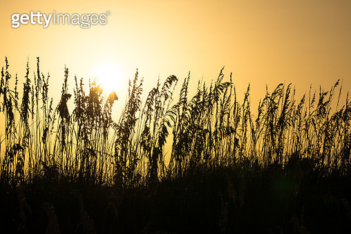 Clearwater Sunset - gettyimageskorea