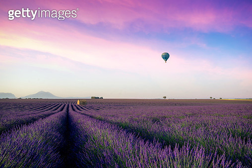 Beautiful morning behind the hills and shines on the endless fields of aromatic lavender field summer sunset landscape with balloon near Valensole, Provence, France. - gettyimageskorea