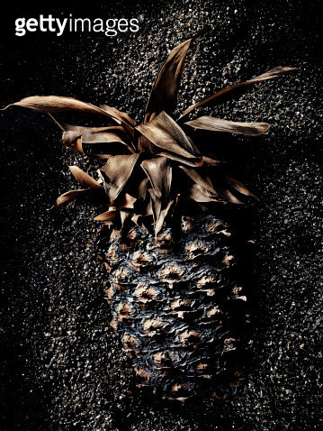still life shot of black carbonized pineapple - gettyimageskorea