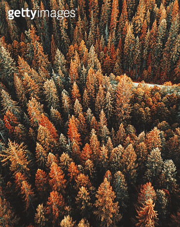 autumn forest aerial view in the washington state - gettyimageskorea