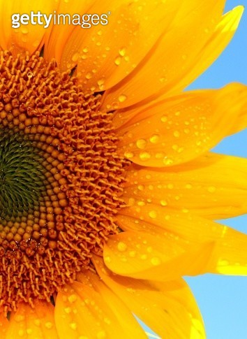 You are my sunshine! - gettyimageskorea