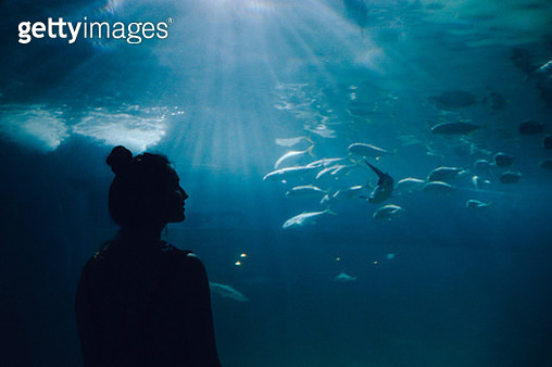 Silhouette of a young woman watching fish in a large aquarium. - gettyimageskorea