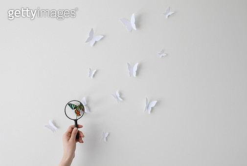 Womans hand holding magnifying glass looking at butterflies - gettyimageskorea