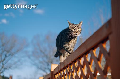 Cat Walking On Wooden Fence Against Blue Sky - gettyimageskorea