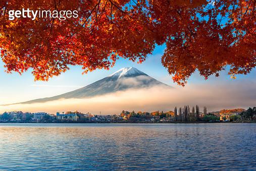 Mountain Fuji with maple tree, Kawaguchiko, Japan - gettyimageskorea