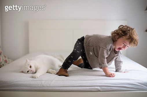 Toddler messing around with the cat in parents bed - gettyimageskorea