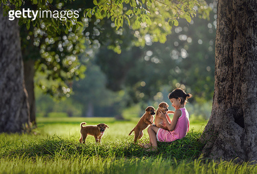 Young girl plays with puppies in Thailand. - gettyimageskorea