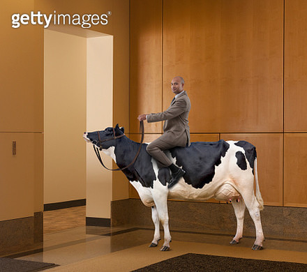 A businessman sits astride a cow in a business lobby. - gettyimageskorea
