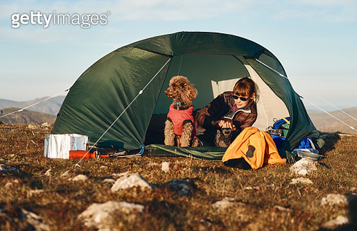 A hiker checking their phone in their tent while wild camping on the summit of High Stile with their dog - gettyimageskorea