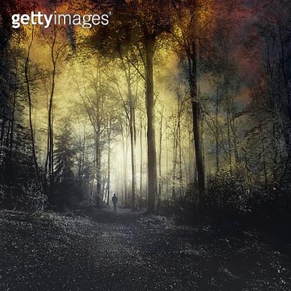 Man walking on forest path - gettyimageskorea
