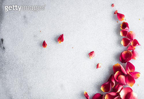 High angle view of petals on table - gettyimageskorea