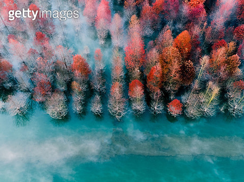 redwood shot in Shanghai from an aerial view - gettyimageskorea