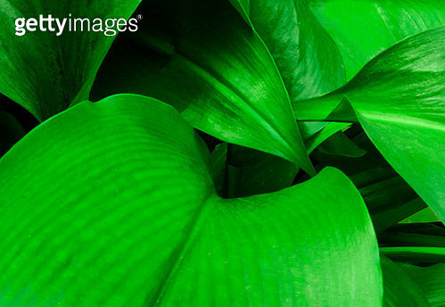 Some leaves forming a beautiful pattern. - gettyimageskorea