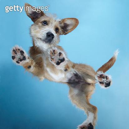 PuppyDance1 - gettyimageskorea